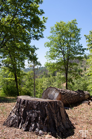 sequoia-national-forest-logs