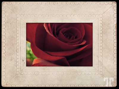 Rose with antique frame