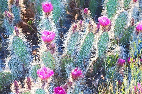 happy-pink-cactus-flowers-APainting