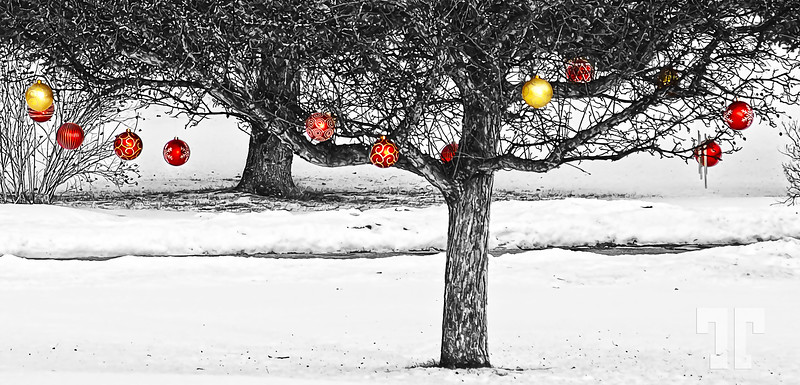 Winter fruit  I noticed that in this area, people keep their Christmas decorations even in January - it warms up the winter :)
