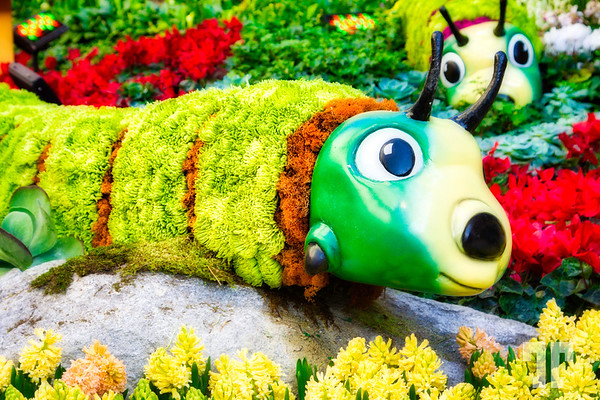 """Caterpillars  made with real flowers at the Spring garden and conservatory - Bellagio Hotel, Las Vegas in 2014 <a href=""""http://vegasgreatattractions.com/bellagio-botanical-garden-spring-2014/"""">http://vegasgreatattractions.com/bellagio-botanical-garden-spring-2014/</a>"""