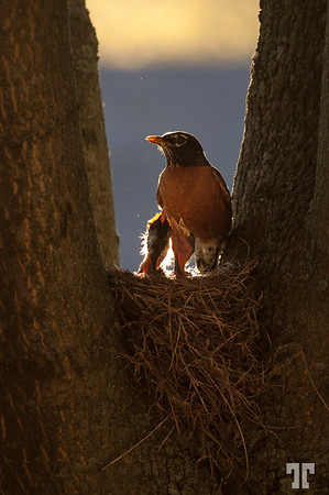 robin-mother-7