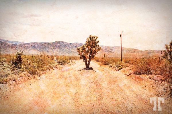 joshua-tree-country-road-arizona-texture