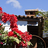 red-poinsettias-mexican-house