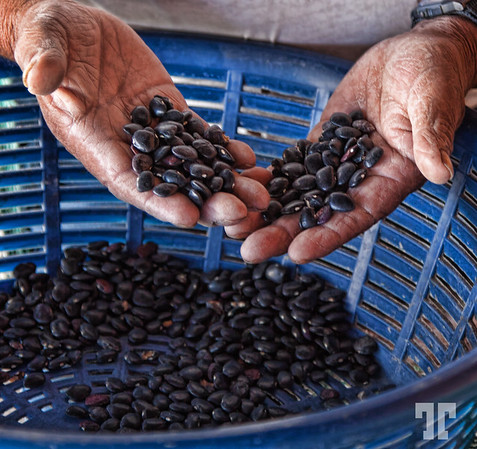Sorting black beans in Guatemala countryside