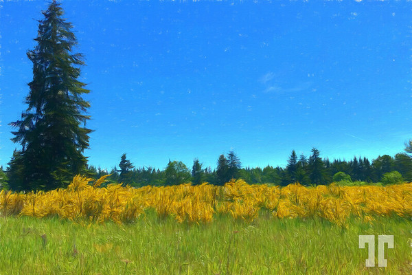 yellow-flowers-cp