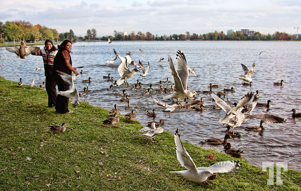 October 5, 09<br /> <br /> Free dinner<br /> <br /> I just thought to add this photo to my today's shot because:<br /> <br /> Saturday evening when we went to Dows lake in Ottawa to take some pictures,<br /> I saw these ladies feeding the birds. <br /> I thought it was fun to take some shots of the birds fighting for their piece of free dinner.<br /> <br /> However, only now, viewing the photo on a big format on my screen I realized <br /> what was actually their intention... I guess it was about free dinner on both sides... :)
