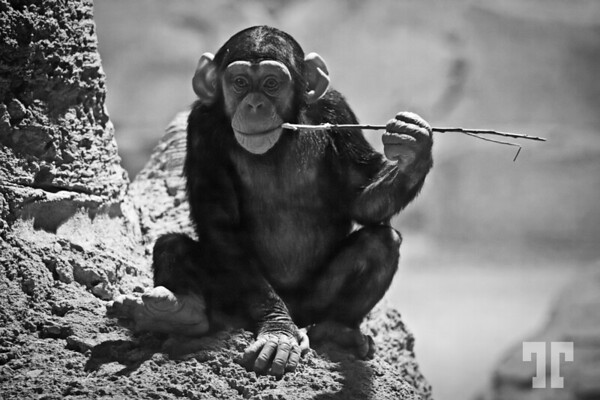 The philosopher - Zoo of Bremerhaven, Germany (one of my favorite photos)