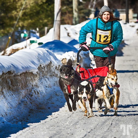 Dog sled race - 4 dogs, Ontario 2013