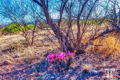 arizona-cochis-county-spring-cacti