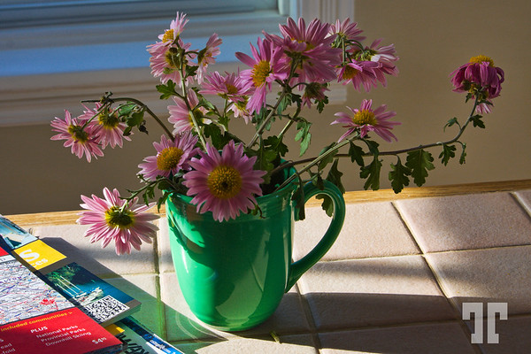Still life - or, I can say: still alive flowers in October...