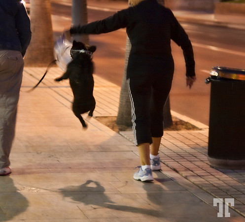 16 May 09<br /> <br /> Jumping dog :)<br /> <br /> I captured this dog last night, while walking on the street - he was trying to catch that empty plastic bottle :)