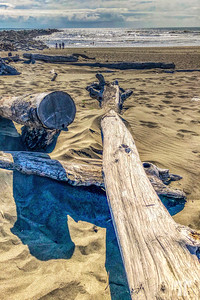 drift-wood-beach-ocean-shores-wa-AU-studio