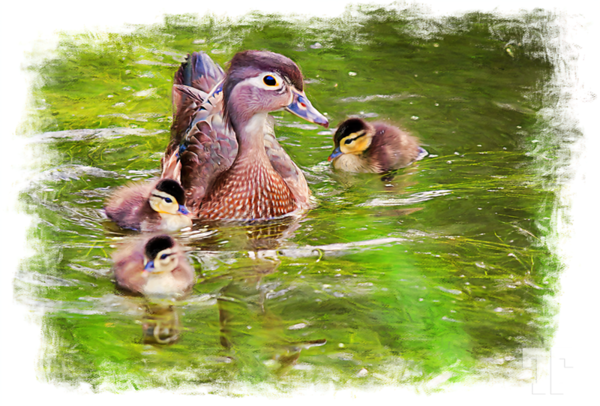 mother-duck-painting-art
