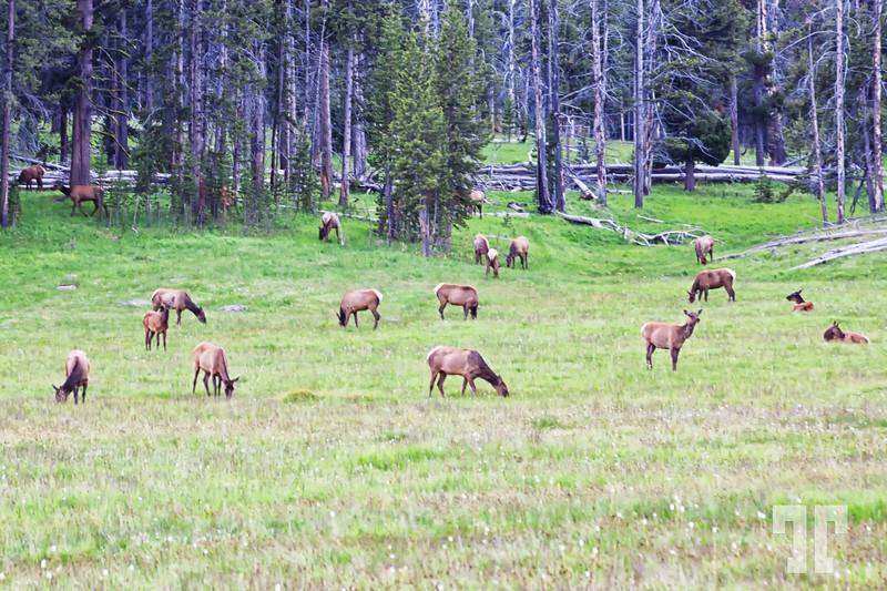 deer-and-moose-yellowstone-national-park