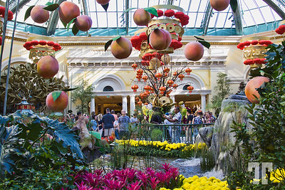 Chinese New Year of the Monkey 2016 at Bellagio Gardens and Conservatory, Las Vegas #ChineseNewYearLasVegas