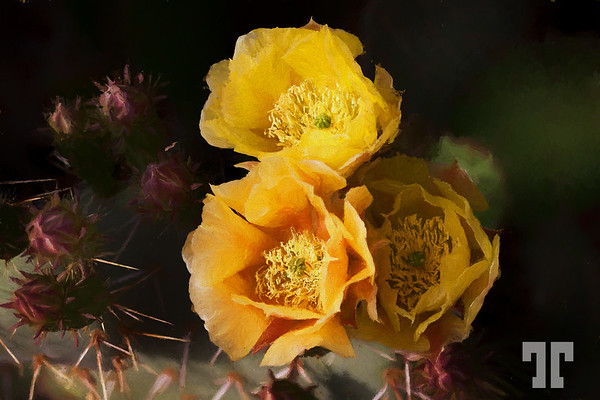 yellow-cactus-flowers-painting-E Hopper