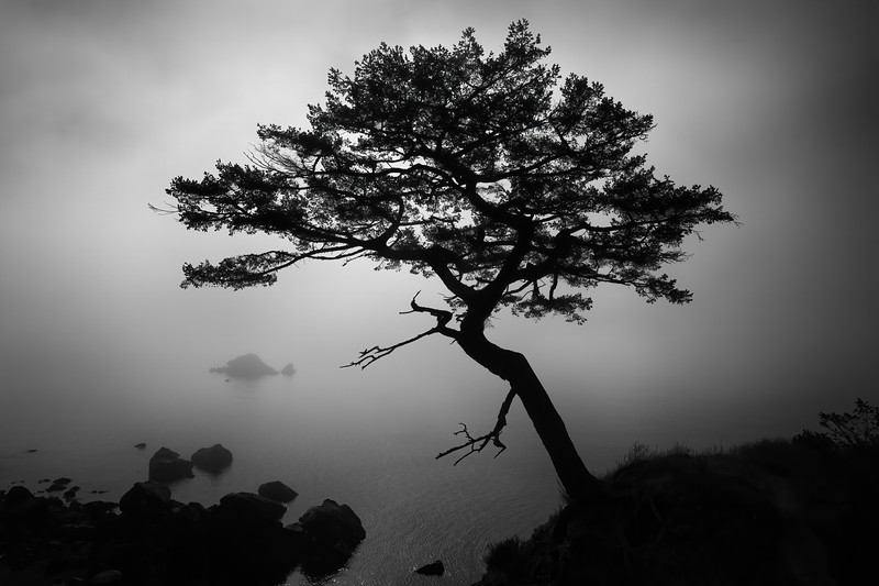 Dances with Fog and Ligth