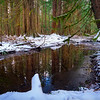 Winter Forest Reflections