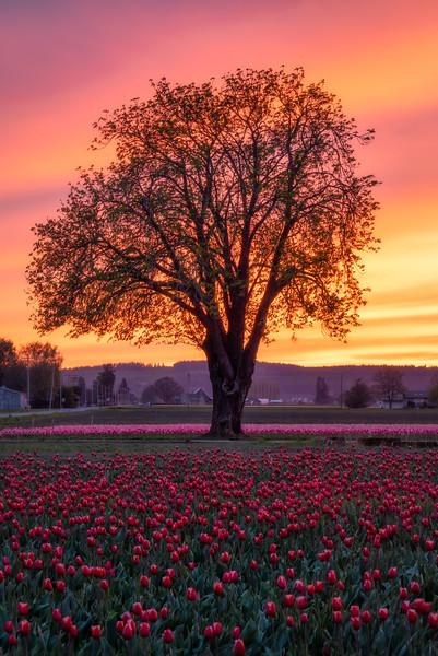 Radiant Tree of Spring's Abundant Life
