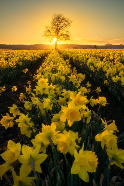 Ever Returning Spring