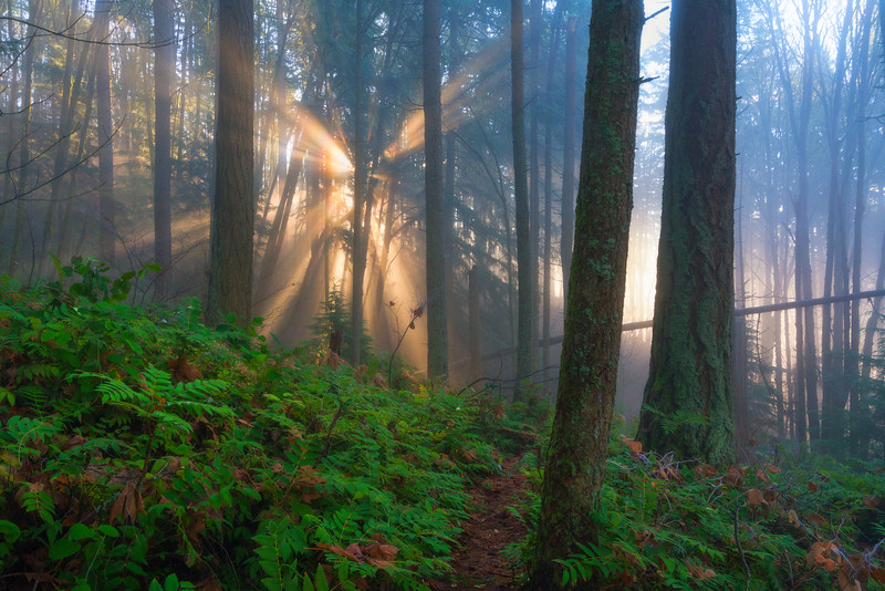 Finding Light in the Forest