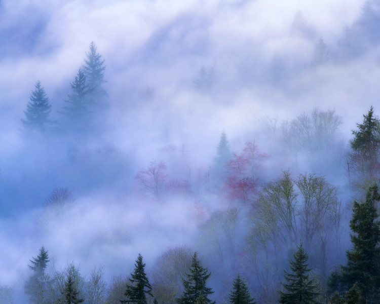 Behind the Veil of Nature's Mystery