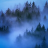 Misty Forest