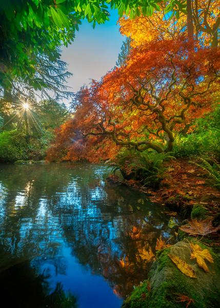 Halloween Sunrise at Kubota Pond