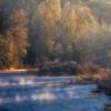 Cedar River Grove