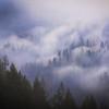 Deja Vu: Return to a Forgotten Forest
