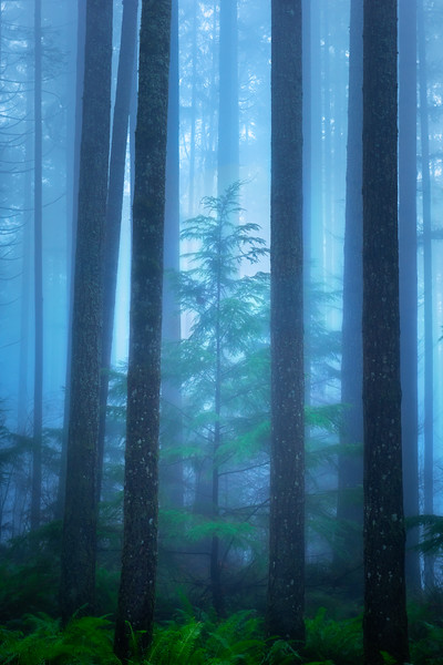 A Young Tree in a Foggy Forest