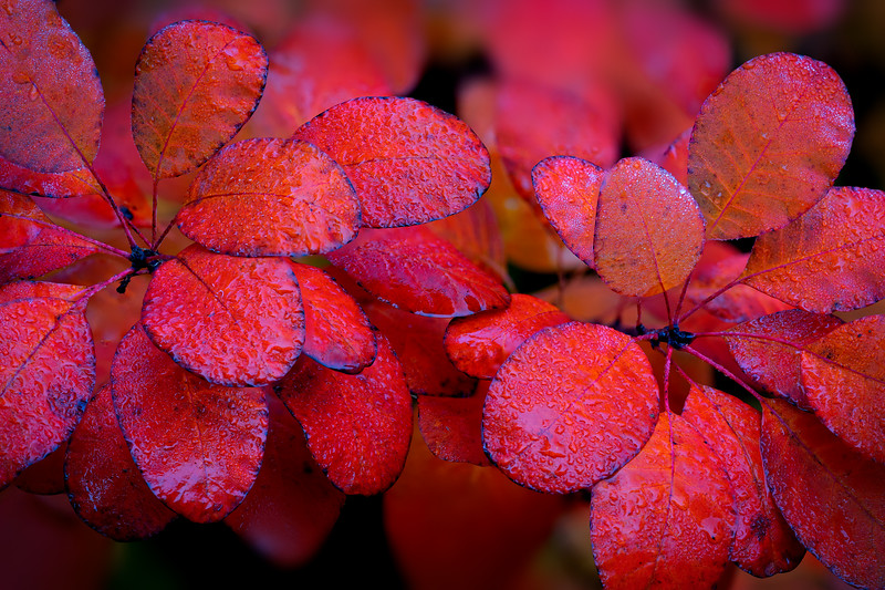 Morning Dew on Autumn Leaves