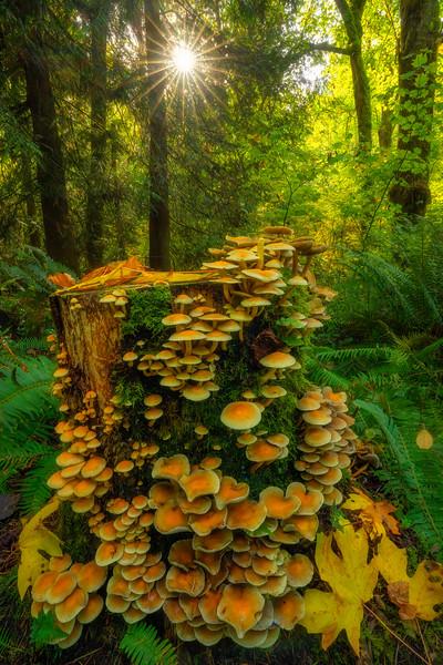 Mushroom Ladder into a PNW Forest