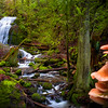 Coal Creek Falls  Fungi Discovery