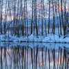 Bare Tree Reflections in the Winter Light