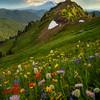 Hot August Meadow in the Goat Rocks