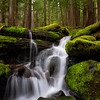 Small Stream in an Ancient Forest