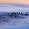 Forest Carpet of Clouds