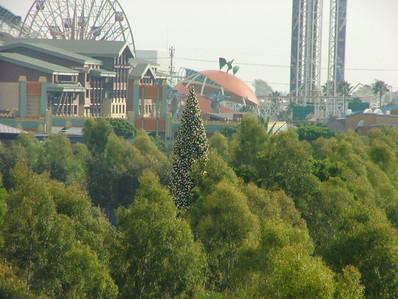 Disneyland Resort - 11/04/05