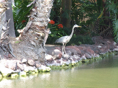 A crane stops in to enjoy the scenery