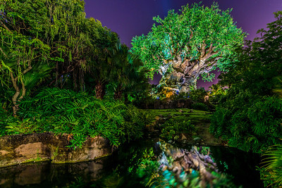 The Tree Of Life, Reflected
