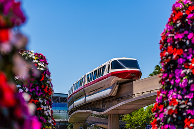 Monorail Red through the Flowers