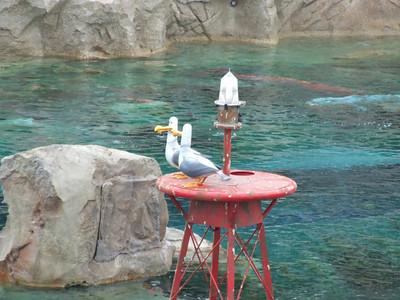 Still only 2 Seagulls
