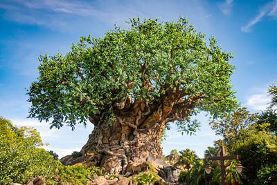 The Tree Of Life, Animal Kingdom Walt Disney World - Orlando, Florida