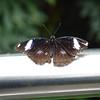 Niagra Butterfly Conservatory -Liz