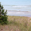 Grass growing in sand  The Pinery  Lake Huron