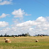 Grass (Hay) Fields