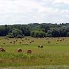 Hay (grass field) 2