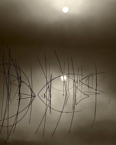 Sunrise in Fog-Rolf